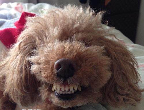 犬の歯磨き方法