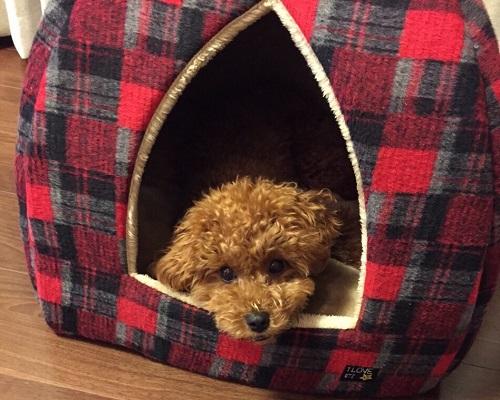 犬が寝るスペース