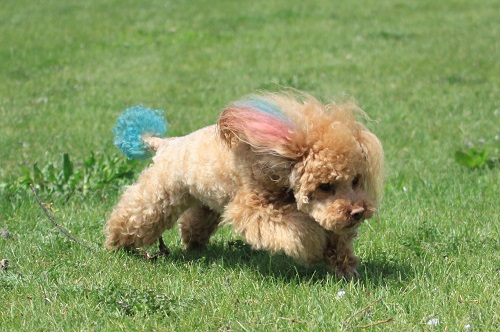 カラーリングする犬