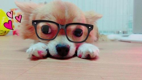 メガネを掛けたワンちゃん