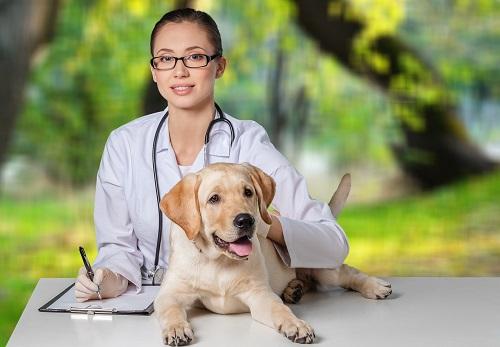 愛犬の検査