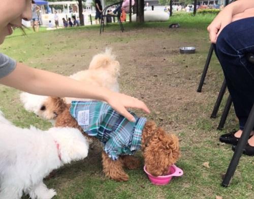 他の犬と仲良くする
