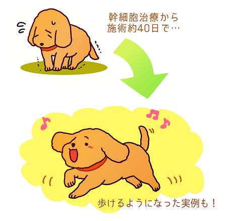 犬の幹細胞治療