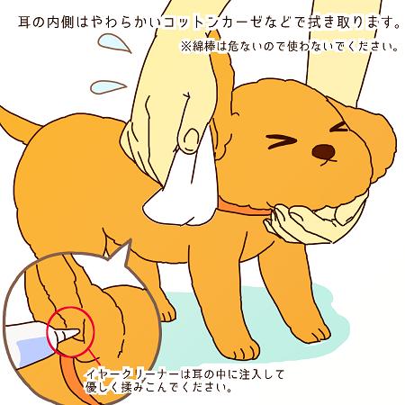犬の耳掃除のやり方