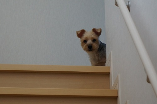 留守番する犬
