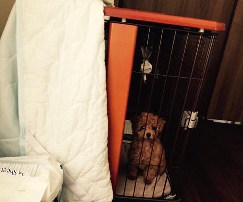 ケージに入る犬