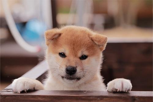 犬を飼う前に注意点