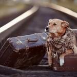 家出する犬
