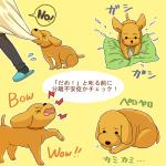 犬の不安分離症