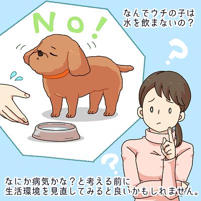 水を飲まない犬