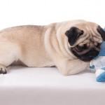小型犬の骨折
