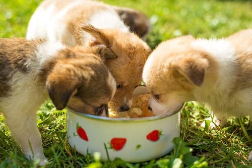 犬の食いつきが良いドッグフード