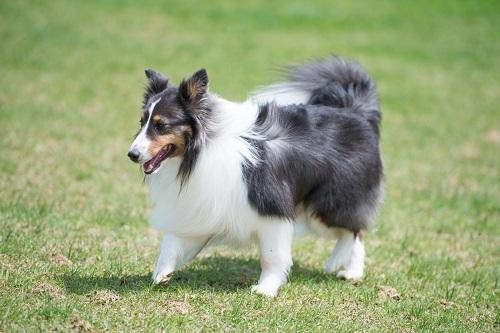 毛並みの良い犬
