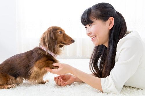 犬を褒める