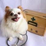 獣医の選び方