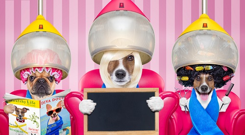 美容院の犬