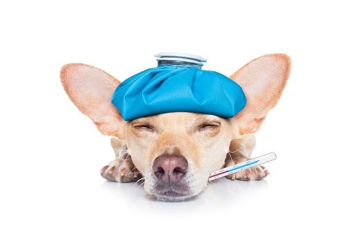 病気で寝る犬