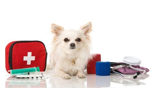 犬の水頭症の治療