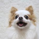 撮影した犬