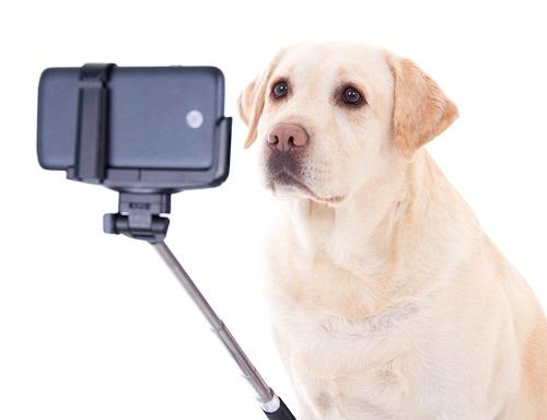 カメラの前の犬