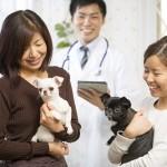 犬の健康診断