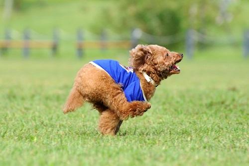 ノーリードの犬