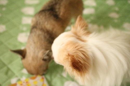 たわむれる犬