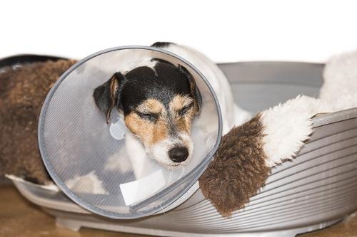頭に何かつけている犬