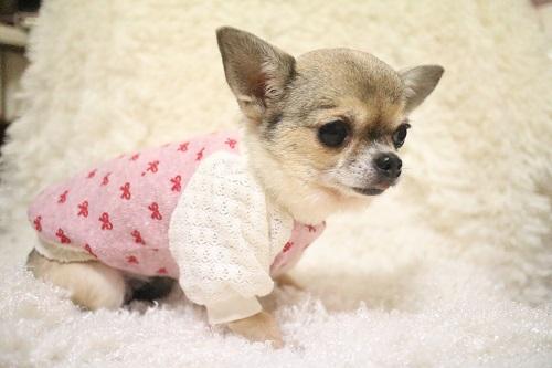 かわいい犬