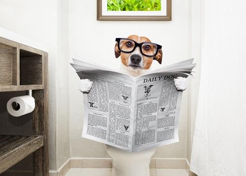 トイレに入る犬