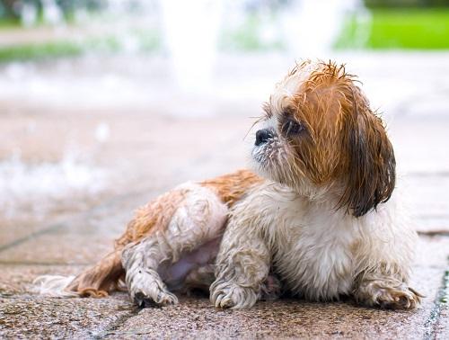 濡れた子犬