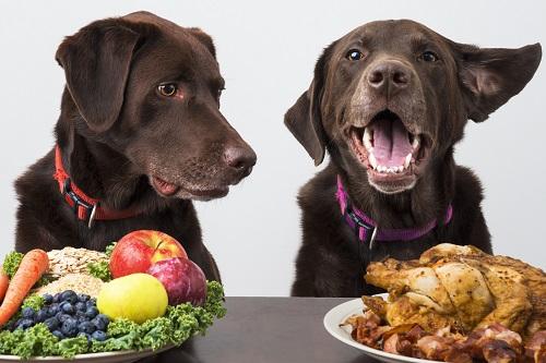 2匹の犬が食事をしている