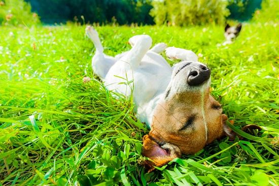犬の日光浴