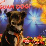 GUAM DOG