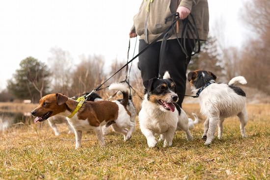 犬を散歩させる