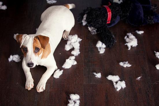 紙くずを散らかす犬