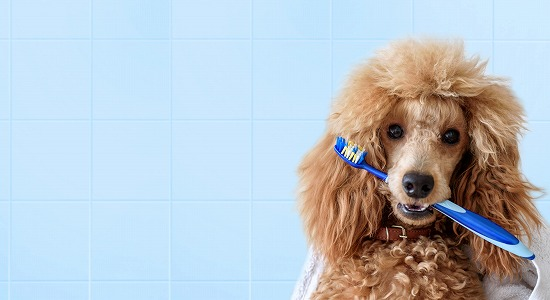 犬の歯ブラシ