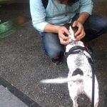 愛犬と話す飼い主