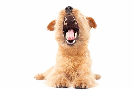 口を開ける犬