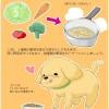 犬の食欲が無いのは胆泥症が原因かも?【食事や症状】