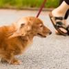 犬になめられない方法@気をつけるべき4つのこと